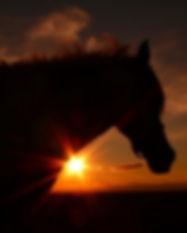 cheval-au-couche-de-soleil-1283128125-11