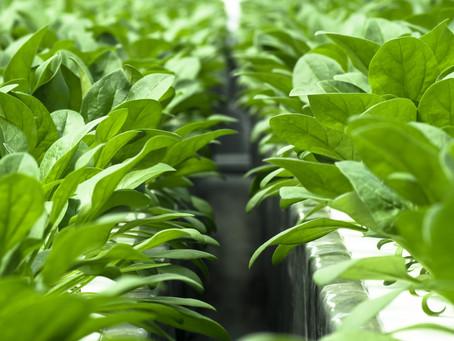 次世代農業のコンサルティング