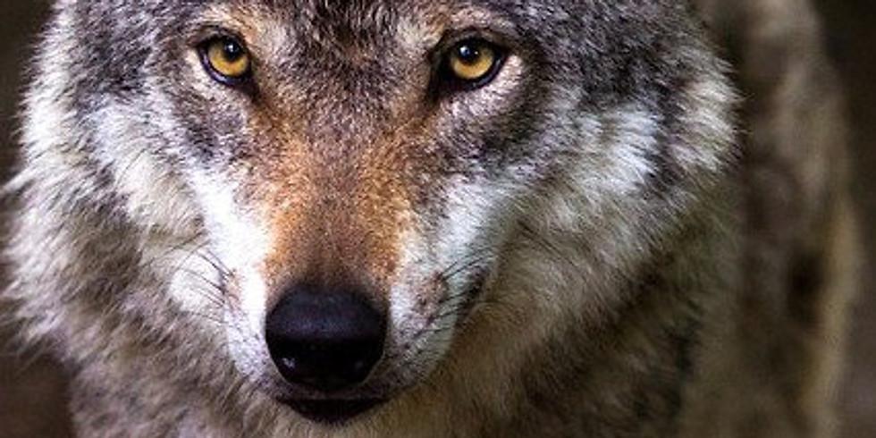 Sulle tracce del lupo - Full day trek nel Parco del Beigua