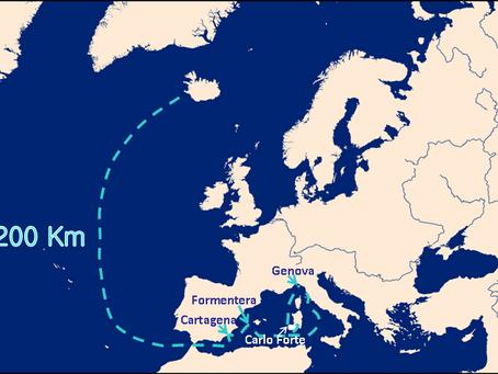 Le orche in Mar Ligure, quello che per ora sappiamo