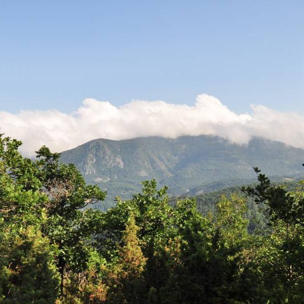 Nella Selva dell'Orba: trekking guidato nei boschi del Beigua