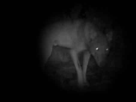 2016-2019 Storie di lupi in Alta Val d'Orba