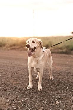 Dog Walker Holly Springs
