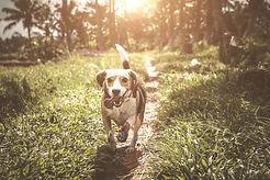 Dog Walking Fuquay Varina