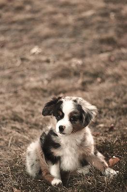 Dog Walker Fuquay Varina