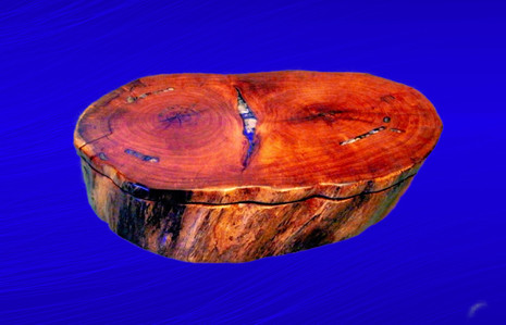 Mesquite With Inlayed Sea Shells