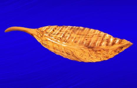 Spalted Cottonwood Leaf