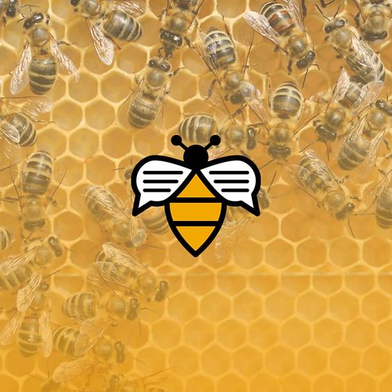 Bee Talks - October