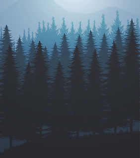 nature-forest-natural-pine-forest-mounta