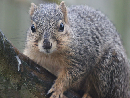 Lessons I've learned from squirrels