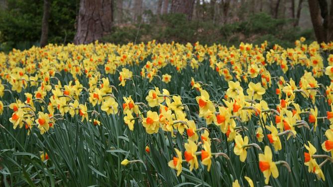 Spring blooming at Garvan Woodland Gardens