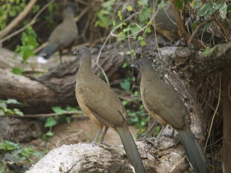 McAllen, Texas, a birding paradise