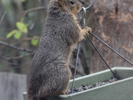 What I learned from squirrels
