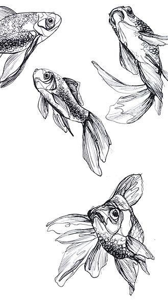 Screensaver Fische.jpg