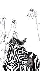 Screensaver Zebra neu.jpg