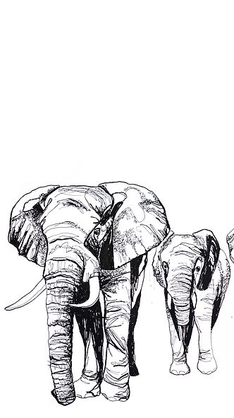 Screensaver Elefant.jpg
