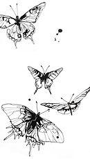 Screensaver Schmetterling.jpg