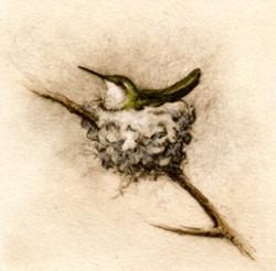 Nesting Hummer
