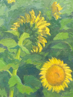 Here Comes the Sun-Walsh, oil 16x12 $1050