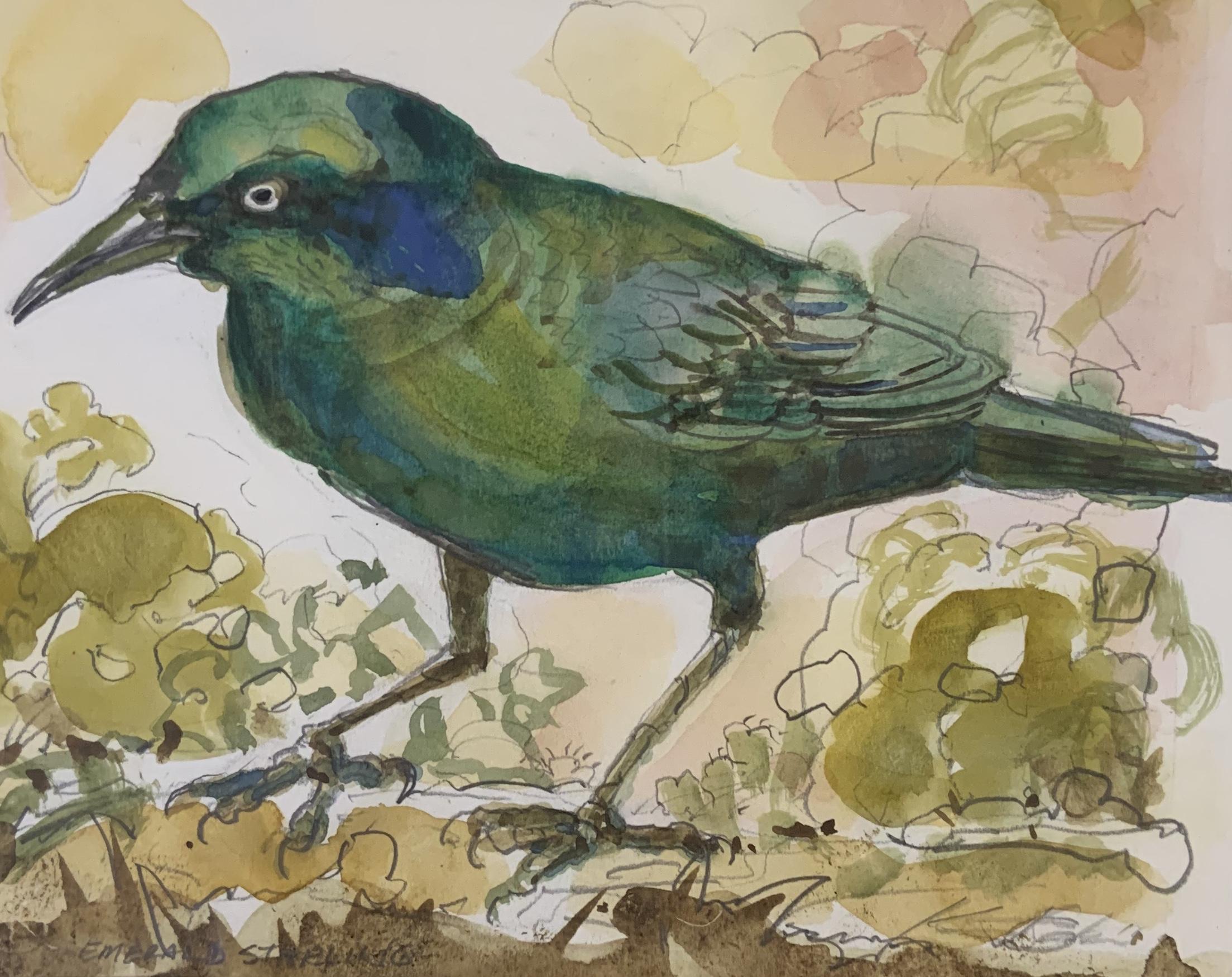 Green Starling-Garber, watercolor $325