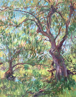 Morning Willow, oil 24x30 $2000