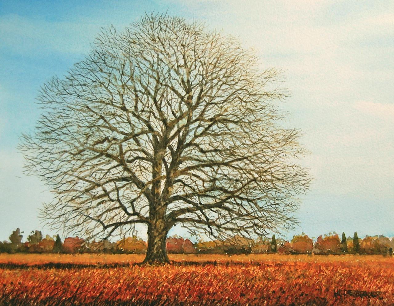 Todds Corner Oak