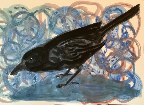 Black crow, watercolor 16x20 $650