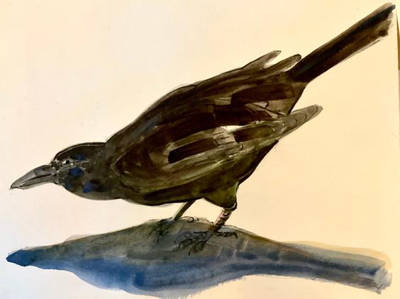 Crow in Shadow, watercolor 11x14 $325