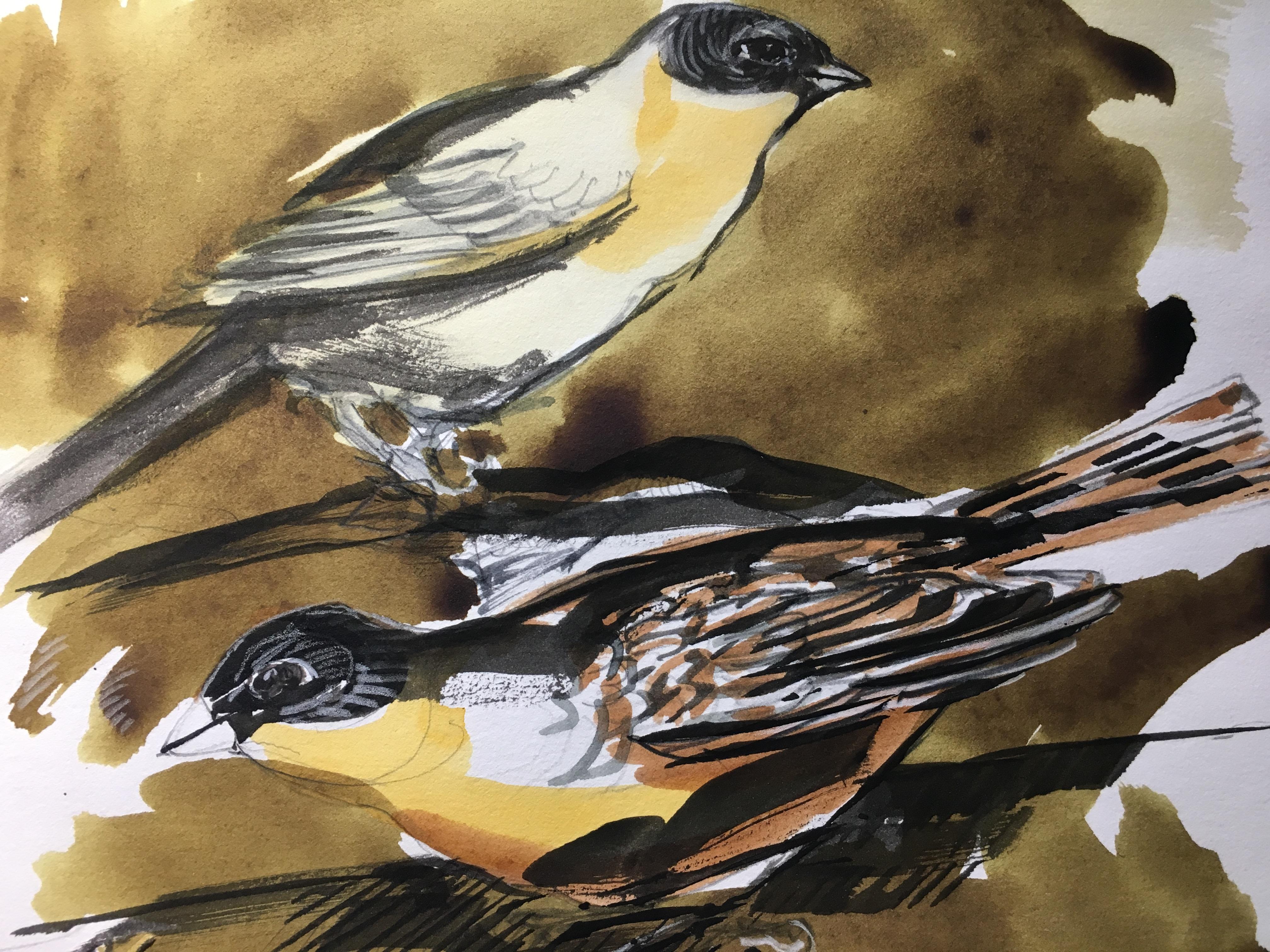 Pair Orioles, watercolor $325