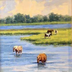 Assateague Ponies, oil 20x20 $3200