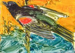 Red Wing Blackbird, oil on enamel $300(unfr)