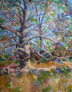 Beech Tree-Fish, pastel 32x40 $2600