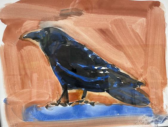 Blue Crow, watercolor 11x14 $375