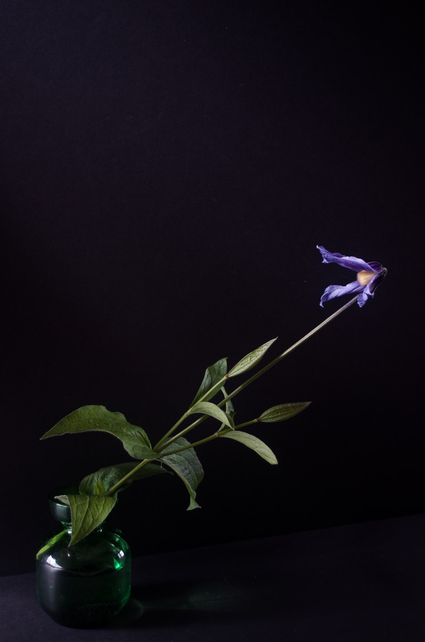 Columbine by Nanny Trippe, archival digital photograph, 18x24 $325