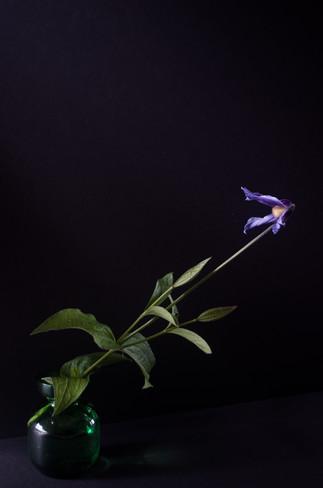 Columbine by Nanny Trippe, archival digital photograph, 18x24 $325