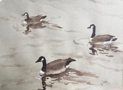 Geese, watercolor