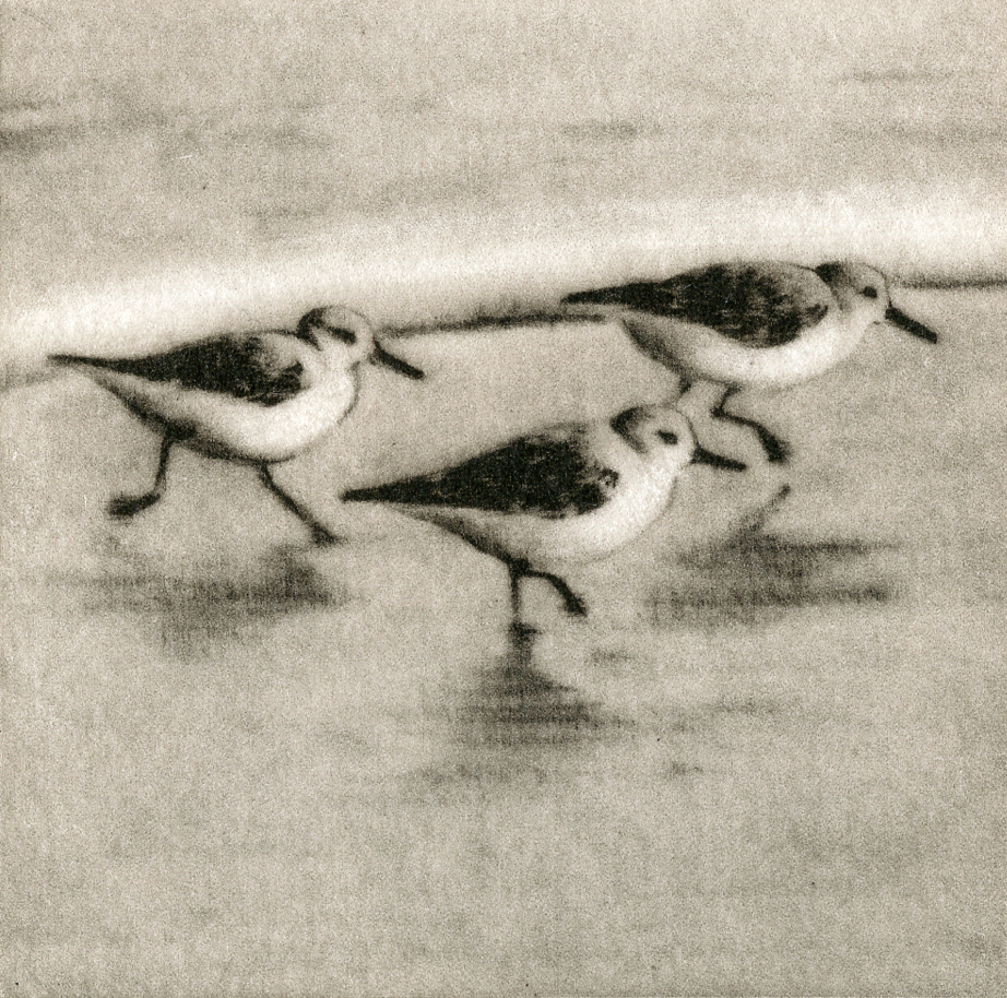 Sanderlings II-Fain watercolor/etching