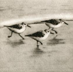 Sanderlings II-Fain watercolor/etching