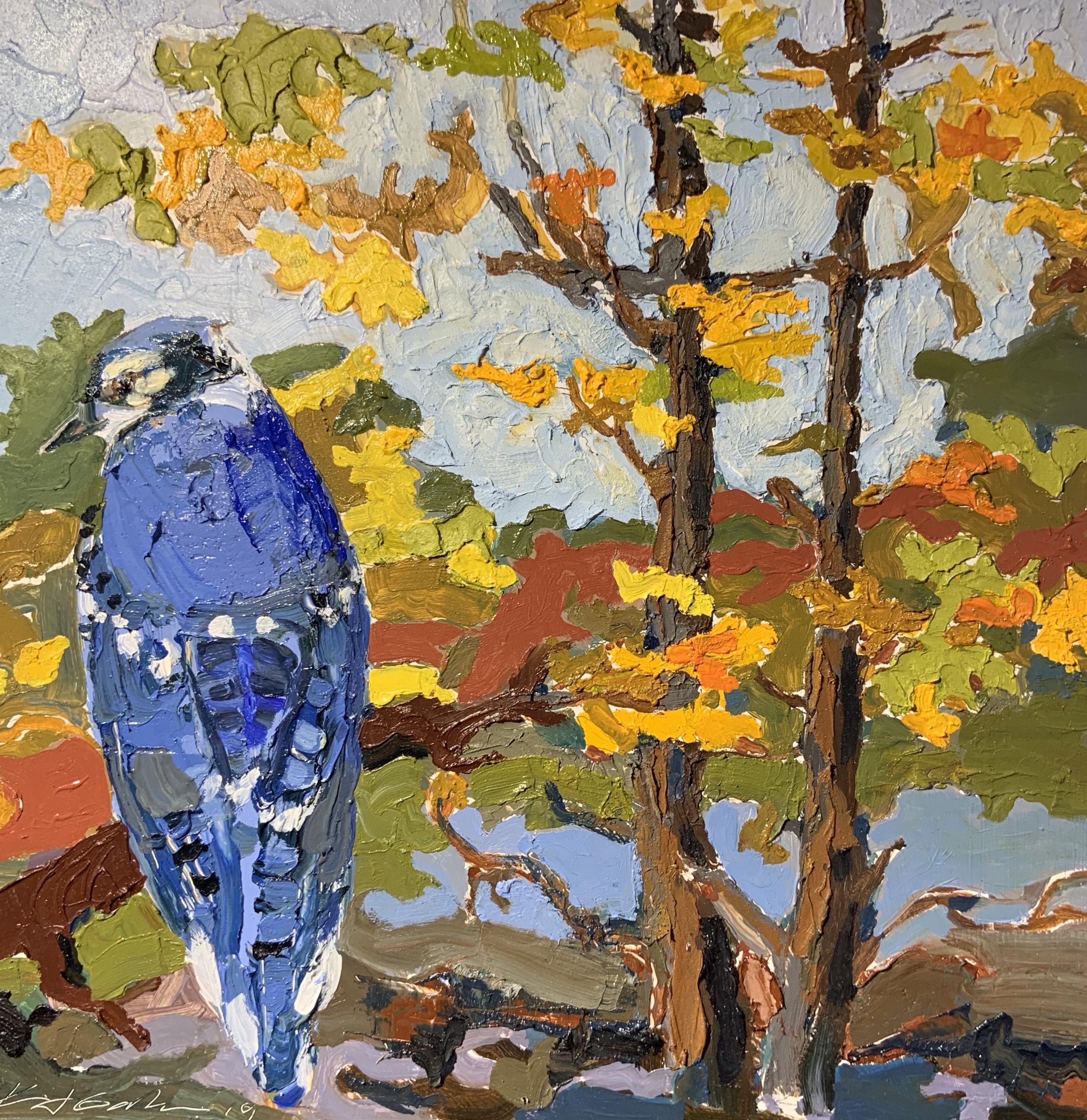 Blue Jay-Garber, oil 12x12 $900