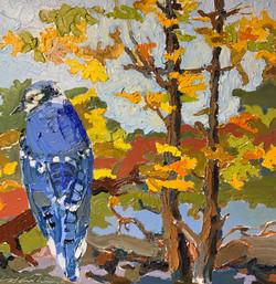 Blue Jay, oil 12x12 $900