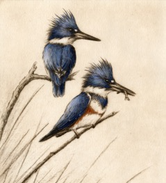 Kingfishers-Fain, watercolor/etching $795