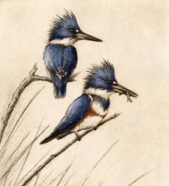 Kingfishers-Fain, watercolor/etching $795