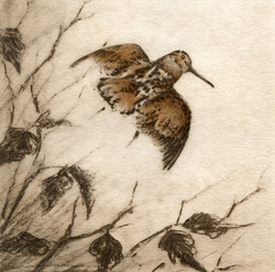 Woodcock-Fain, watercolor/Etching $350