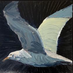 Gull(left) oil 12x12 $900