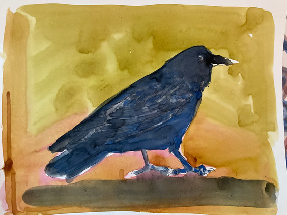 Blue Crow on Yellow, watercolor 1114 $375