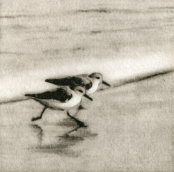 Sanderlings I-Fain watercolor/etching