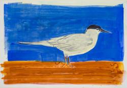 Tern, watercolor $325