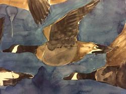 Geese in Flight, watercolor $1425