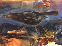 Grackle, watercolor 4325