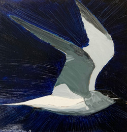Gull, oil 12x12 $900